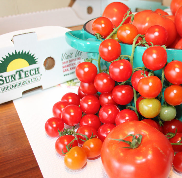 Tomatoes from SunTech, Manotick