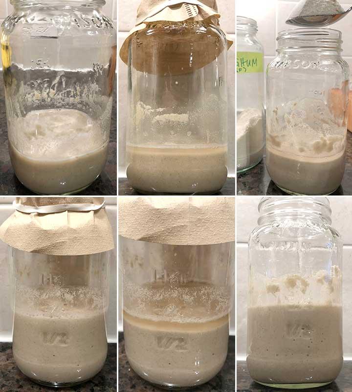 Days 1-3 - Process photos to make a gluten-free sorghum sourdough starter
