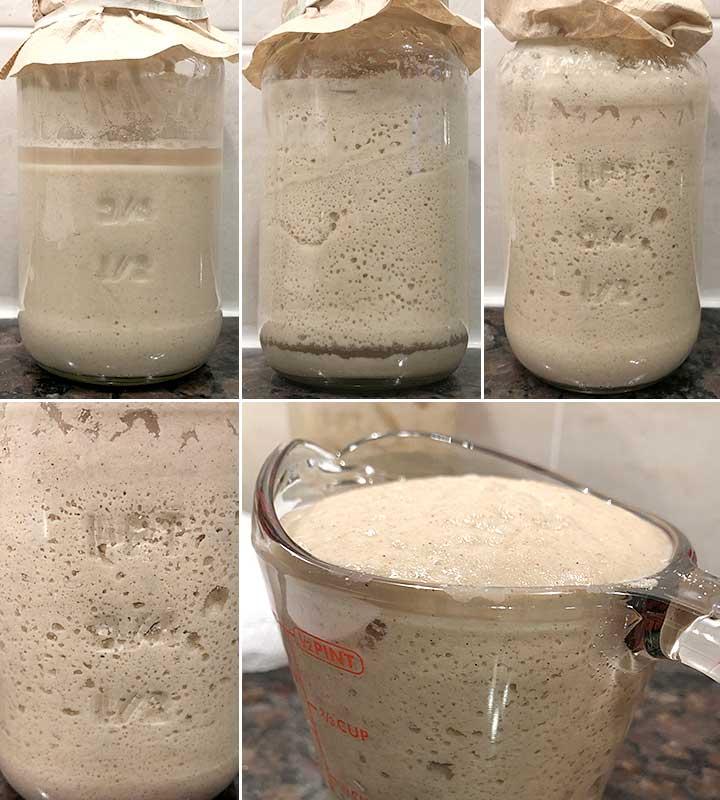 Days 5-7 - Process photos to make a gluten-free sorghum sourdough starter