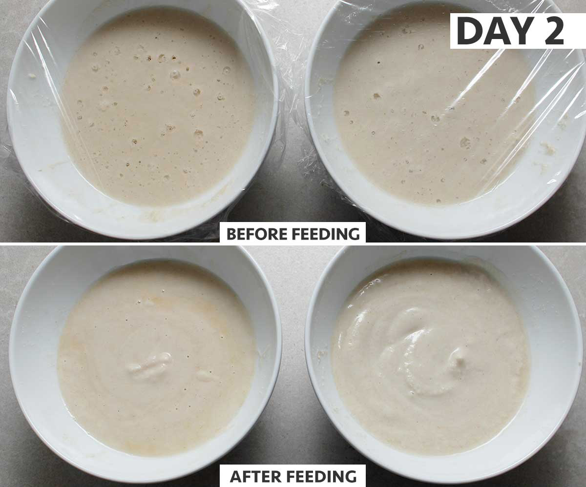 Day 2 of 8: gluten-free sourdough starter step-by-step process