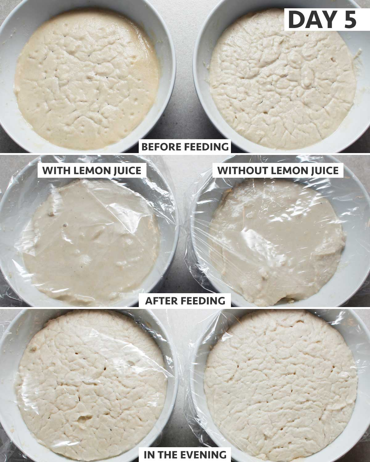 Day 5 of 8: gluten-free sourdough starter step-by-step process