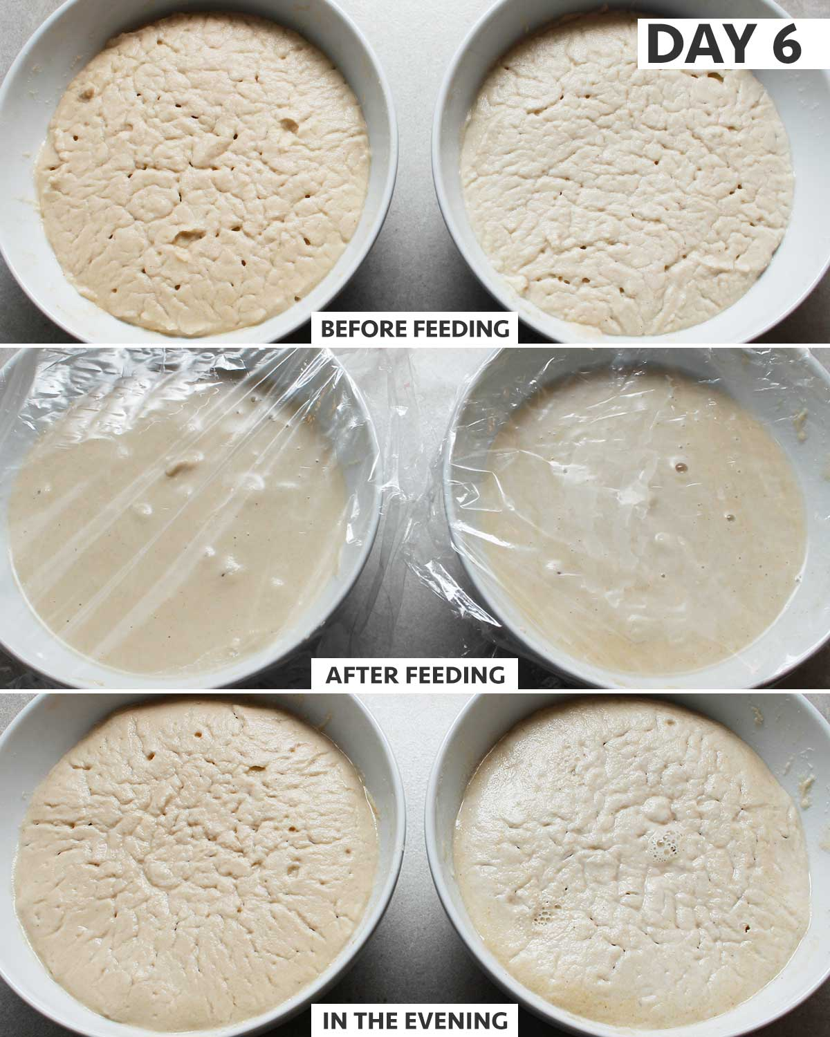 Day 6 (am) of 8: gluten-free sourdough starter step-by-step process