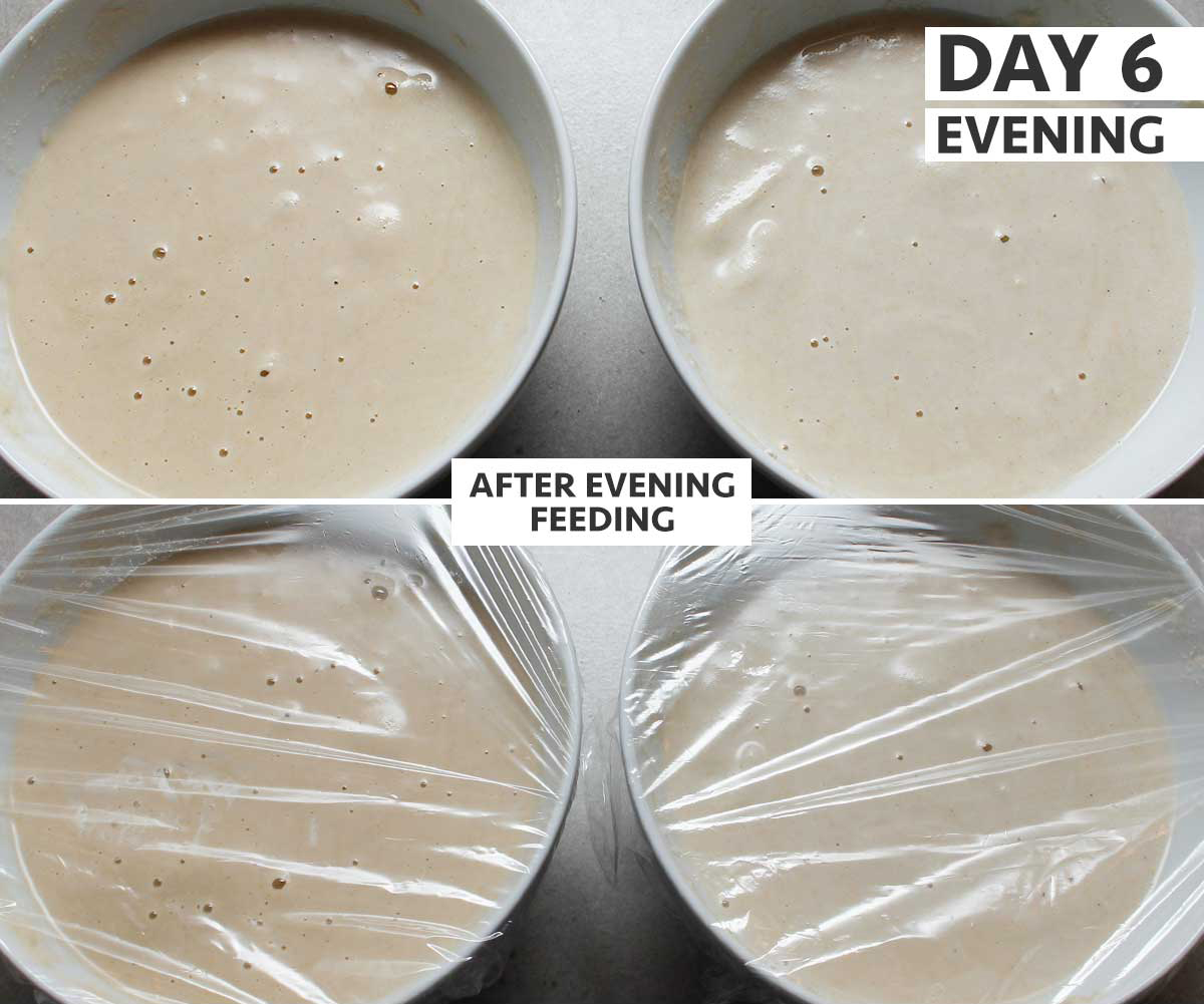 Day 6 (pm) of 8: gluten-free sourdough starter step-by-step process