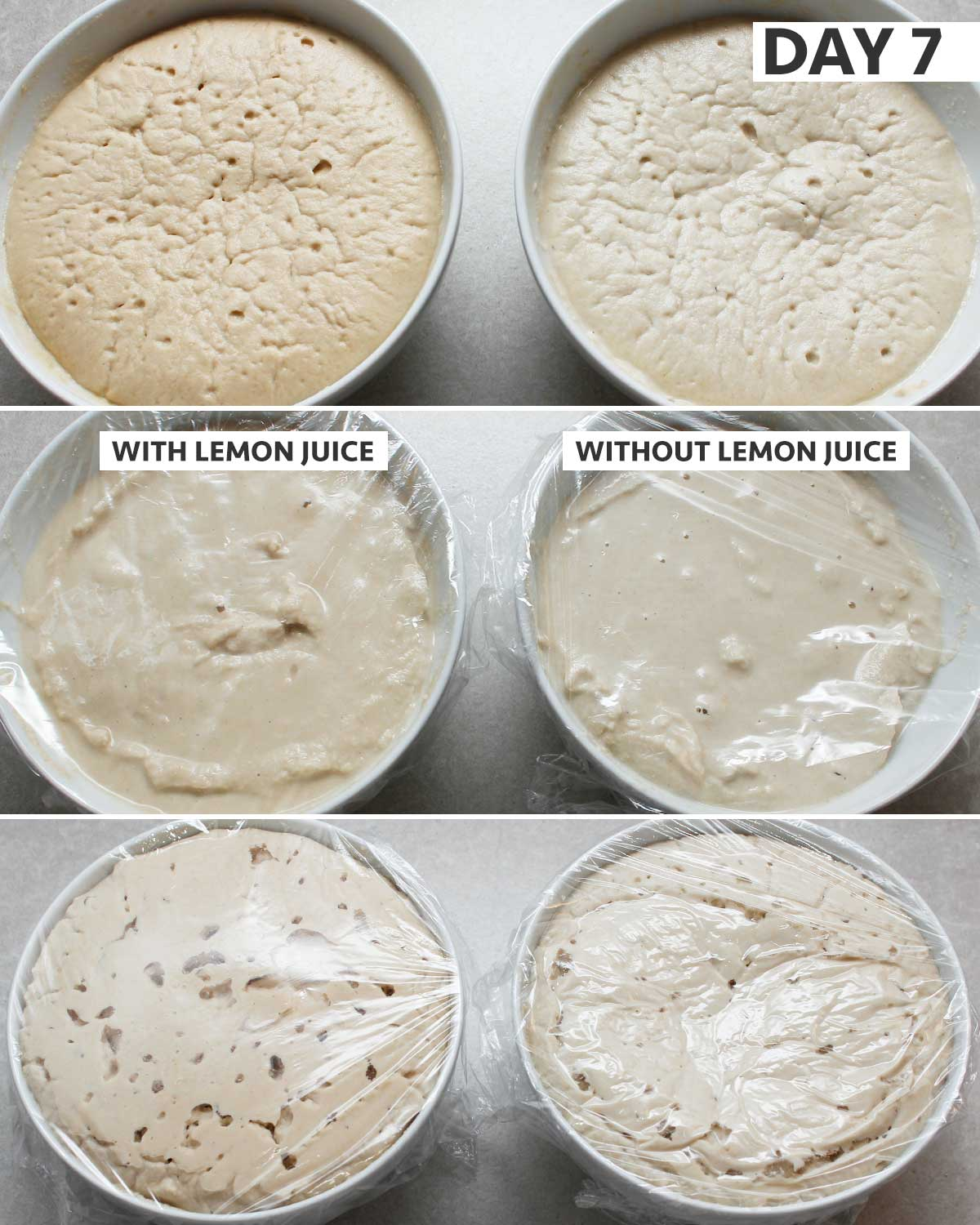 Day 7 of 8: gluten-free sourdough starter step-by-step process
