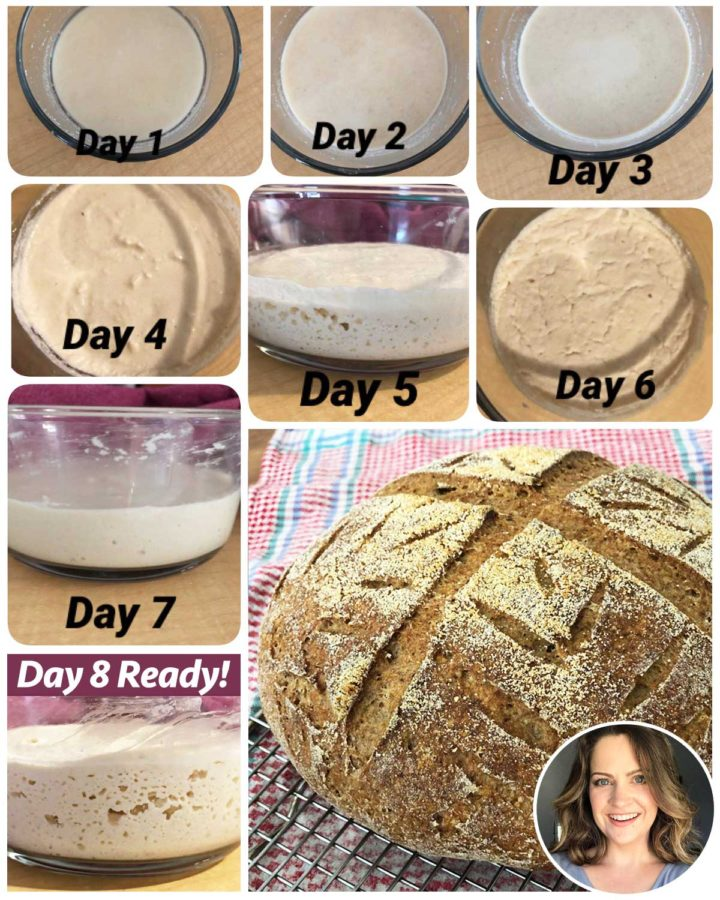 GF sourdough starter process Days 1 to 8 with picture of baked gluten-free sourdough loaf